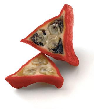 thaumatin_katemfe_fruit