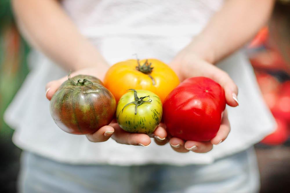 Tomatos2 (2 of 1)